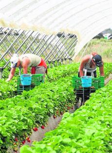 Trabajadoras extranjeras recolectando fresas en Huelva. Foto: agribona.blogspot.com